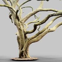 Huge Tree Environment Reference Asset