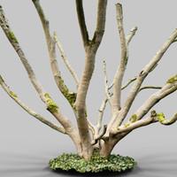 3d model environment asset photoscanned