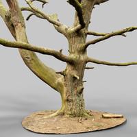 Dancing Tree Photorealistic Asset