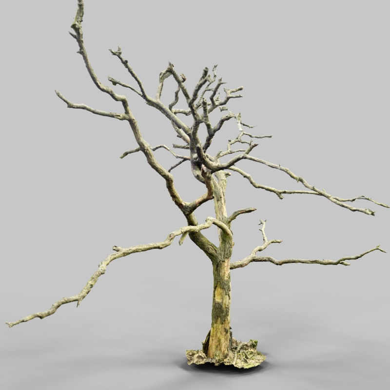 Lonesome Tree_A1_Tree_Bark_Environment_Art_Sample_Reference_Material_Nature_3D_Model_Scan_Photogrammetry.png