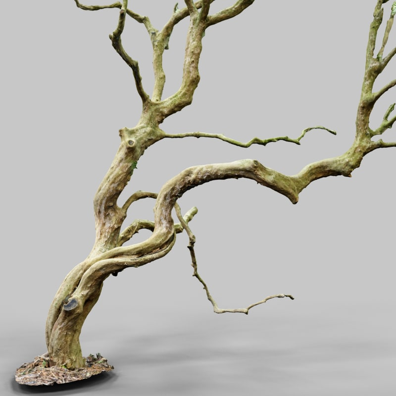 Wiggle_A1_Tree_Bark_Environment_Art_Sample_Reference_Material_Nature_3D_Model_Scan_Photogrammetry.png