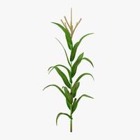 corn plant 3d obj
