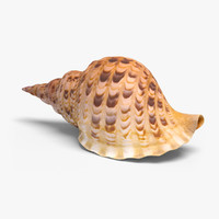 3d realistic conch