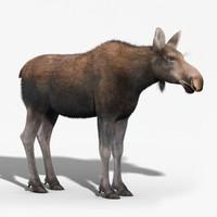 3d moose female fur