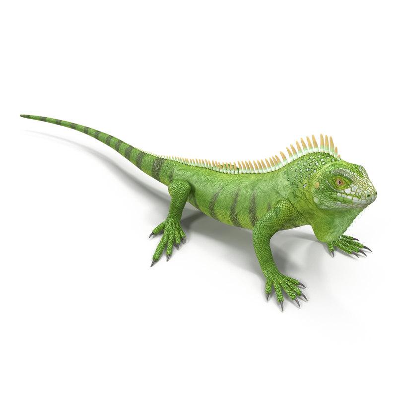 Green Iguana obj 3d model 02.jpg