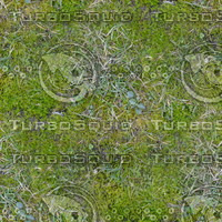 Grass ground  - seamless