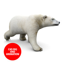 c4d polar bear