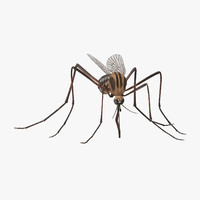3d model blood sucking mosquito