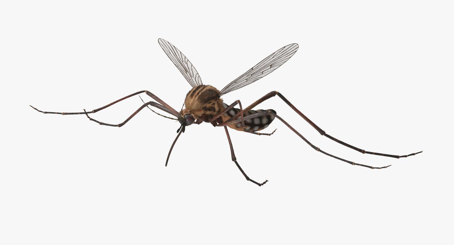 Mosquito_Flying_001_Thumbnail_0000.jpg