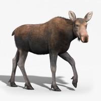 3d model moose female fur rigged