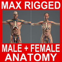 3DS MAX RIGGED Male and Female Anatomy Complete Pack (Textured)