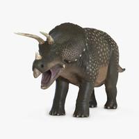 c4d triceratops