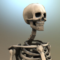 Gameready Lowpoly Skeleton