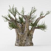 baobab 3d max