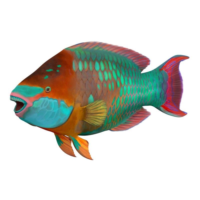Rainbow Parrot Fish 3d model 02.jpg