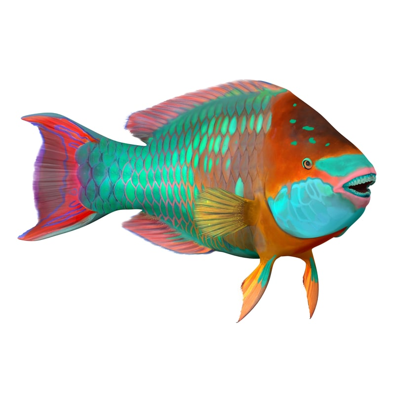 Rainbow parrot fish rigged 3d max for Rainbow parrot fish