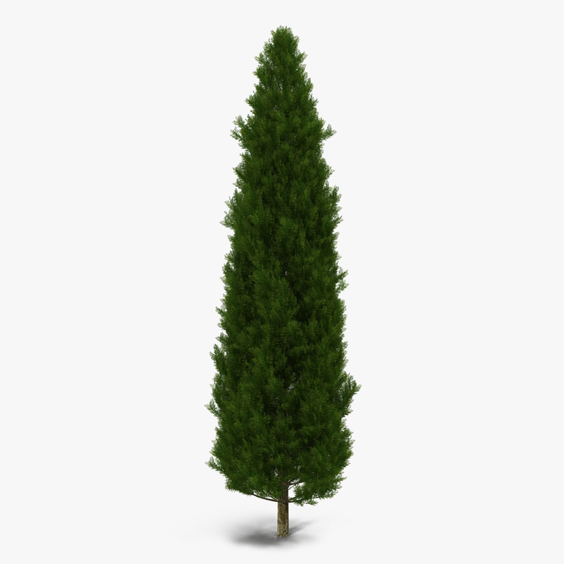 Cypress Tree 3d model 01.jpg