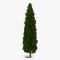 3d cypress tree