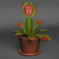 3d model venus fly trap