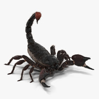 black scorpion pose 2 3d model