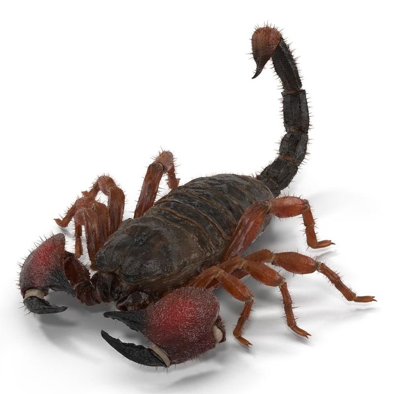 Scorpion vray 3d model 02.jpg
