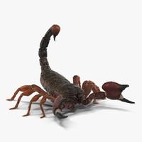 3d model scorpion pose 2