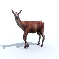 deer animation 3d x