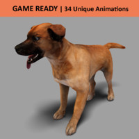 Realistic Casual Dog | Game Ready | 50+ Animations