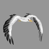 3d seagull model