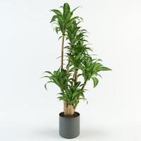3d palm 2014 2011 model