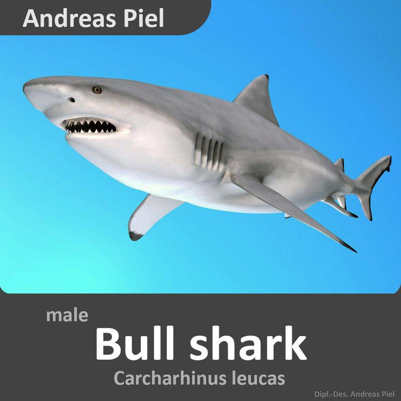 male_bullshark_Carcharhinus leucas_3D_model_by_Andreas_Piel_00001.jpg