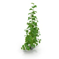 3d realistic cucumber bush model