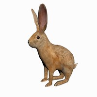 hare real time 3d max