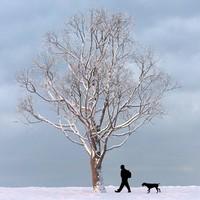 max winter tree