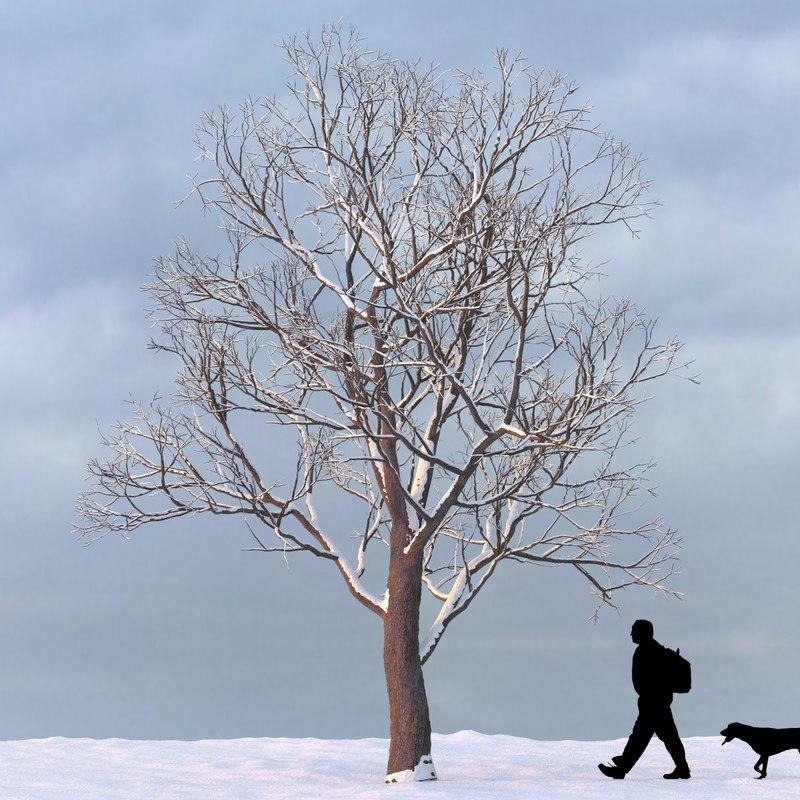 winter_tree_12_f_0000.jpg