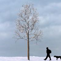 3d max winter tree