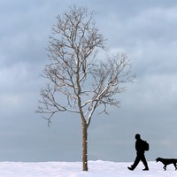 winter tree max