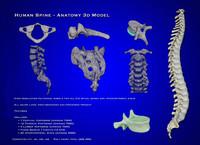 spinal bones obj