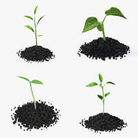 3d model plant sprout