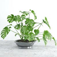 3d flower plant model