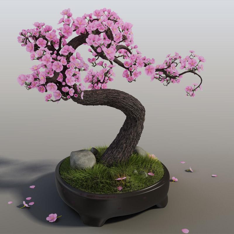 Sakura 1.jpg