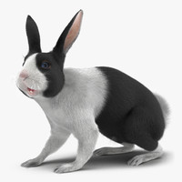3d black rabbit rigged model
