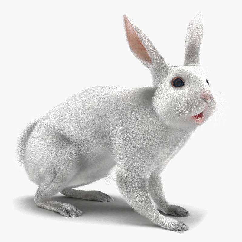White Rabbit Rigged 3d model 01.jpg