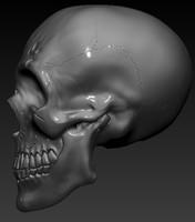 skull humain 3d 3ds