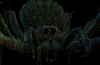 spider scary 3d x