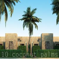 coconut palm max