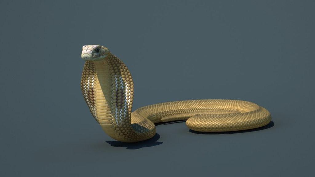 3d_model_cobra_snake_1_by_steplont-d9fkvno.jpg