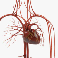 circulatory 3d 3ds