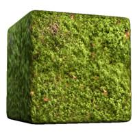 Green Clover Foliage