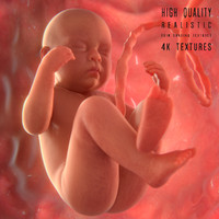 fetus modeled 3d fbx